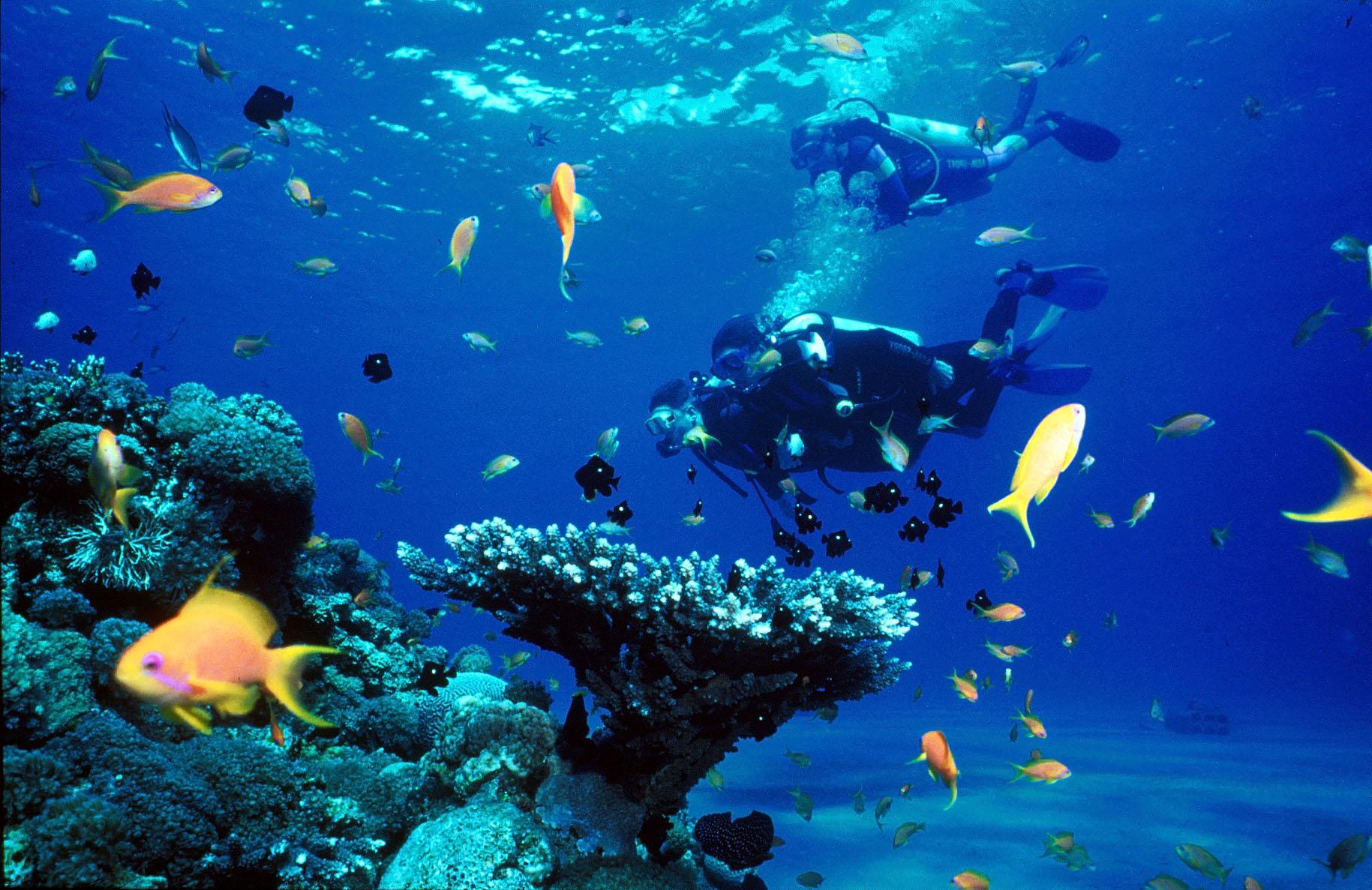 Viaje de buceo en el mar rojo con Mardays y 20000 leguas