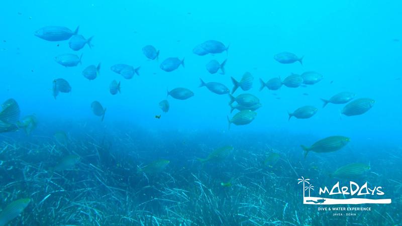 open water curso padi de buceo
