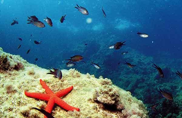 buceo reserva marina