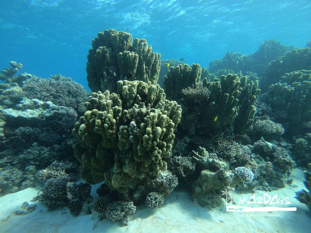Viaje de buceo al Mar Rojo
