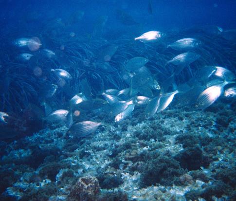 San Martín sur inmersión buceo