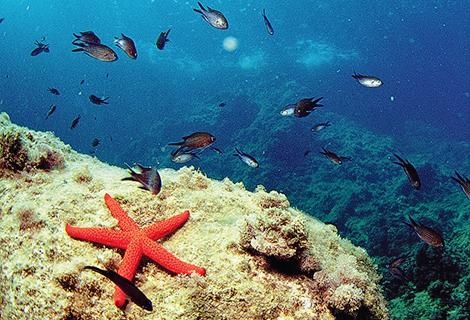 Reserva marina cabo san antonio